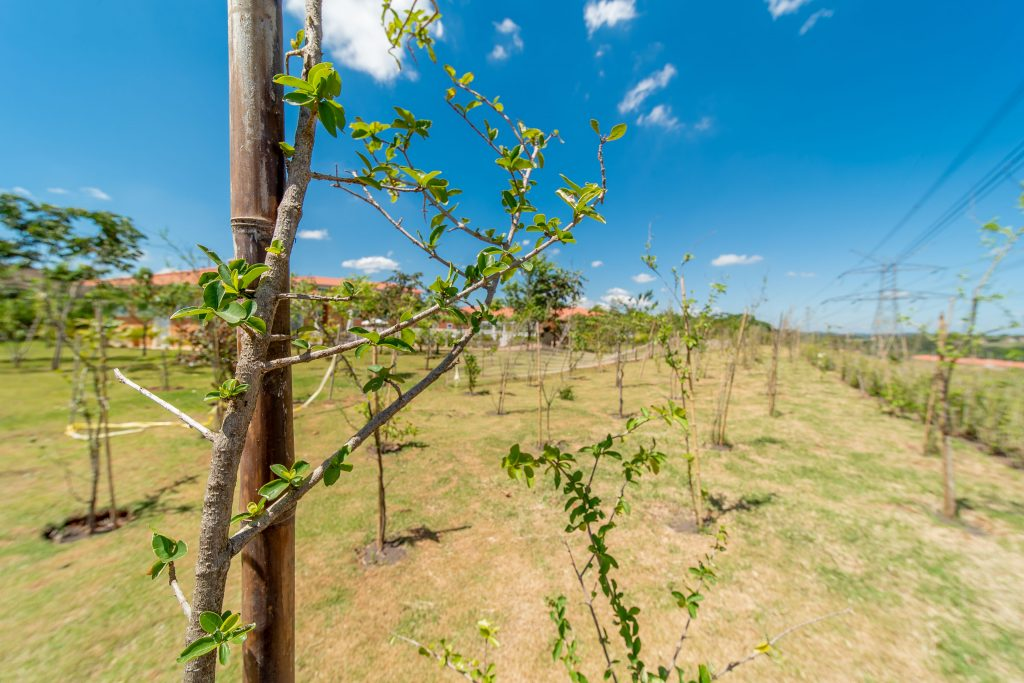Campo das Uvas